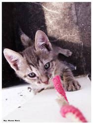 Kitten 2 by artistsforshelters