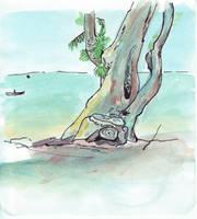 Windblown beach tree - first by monking