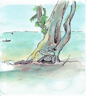 Windblown beach tree - first