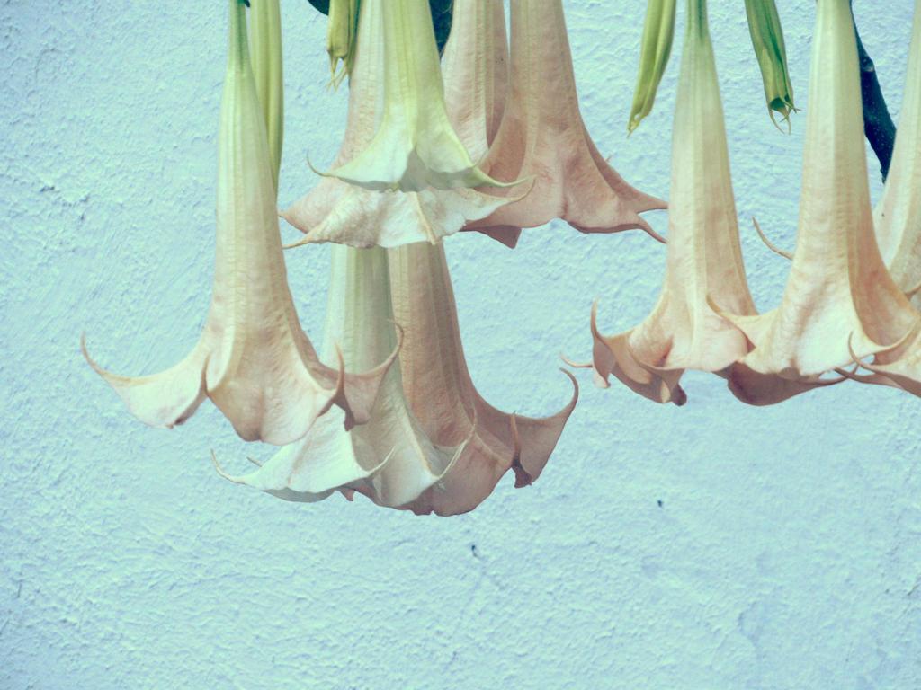Jardin pastel by hakila