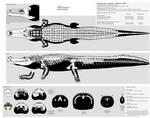 Deinosuchus hatcheri multiview skeletal