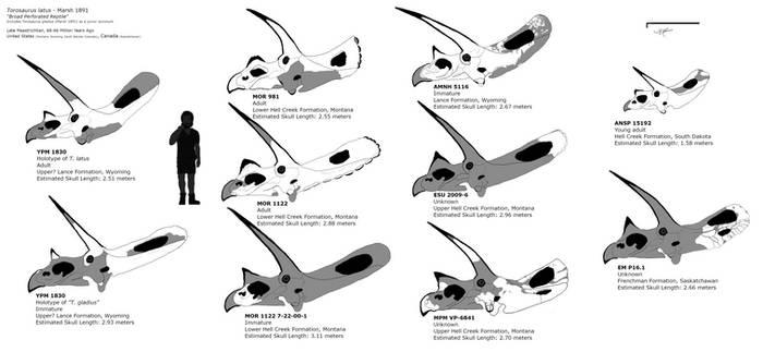 Torosaurus latus skull chart