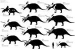 Torosaurus latus size chart