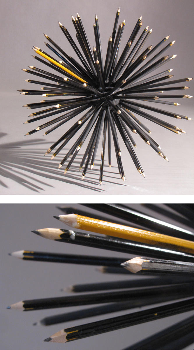 Pencil Urchin by Zakuro-Kona