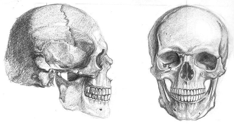 skulls by rrog