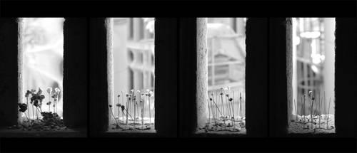 Sagrada 2011 by adamjacksonart