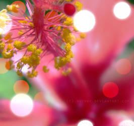 ..::beauty in rosa::..
