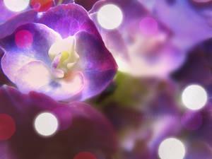 ..:beauty in purple::..