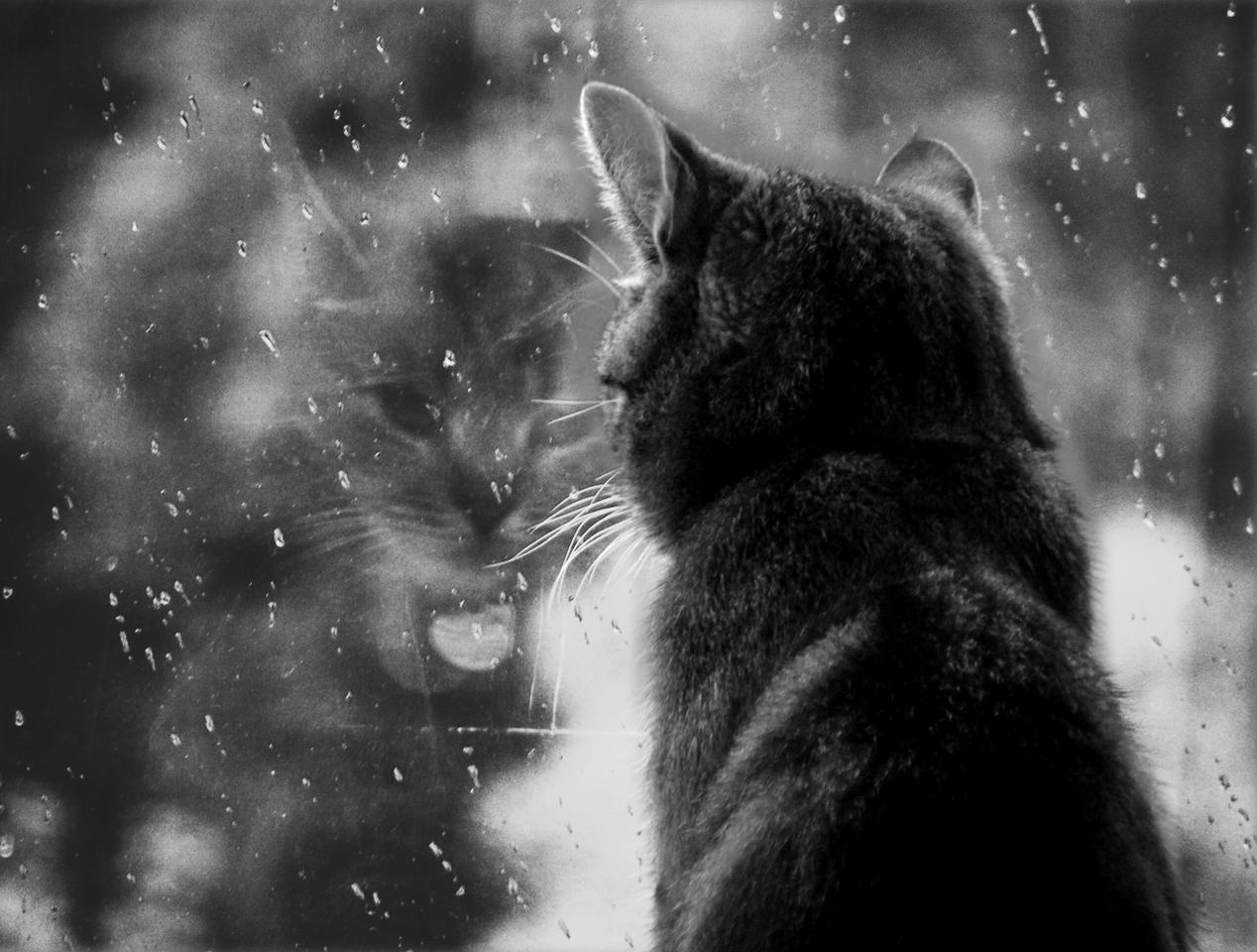 http://fc95.deviantart.com/fs21/f/2007/266/2/2/rain__rain__go_away_by_PrettyMoment.jpg