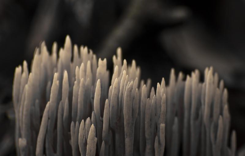 fungi by Puuronen