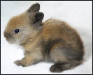 Baby Bunny Series- Three by wylf