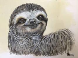 sloth ( luiaard )