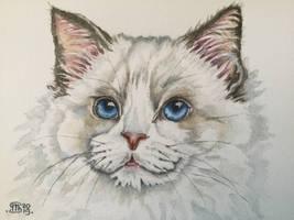 Cat 65