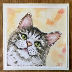 Cat 71