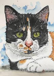 Cat 102