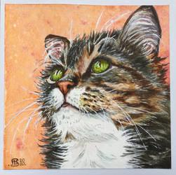Cat 103