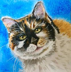 Cat 105
