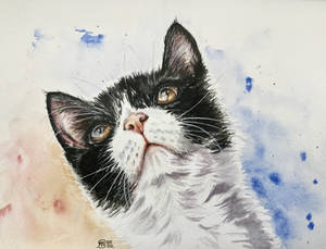 Cat 106