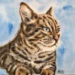Cat 110
