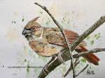 Redbird female.