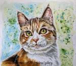 Cat 123