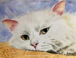 Cat 125