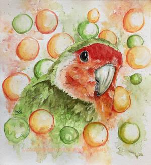 Love bird- agapornis.