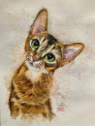 Cat 133