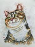 Cat 134