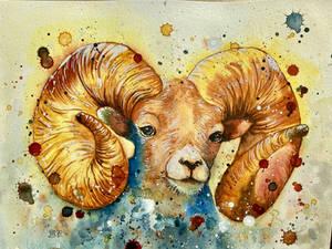 Mouflon ( wild schaap )