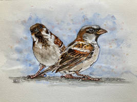 Two little sparrows
