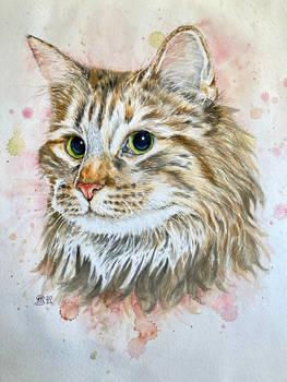 Cat 145