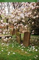 Magnolia Rain UNRESTRICTED by Elandria