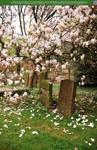 Magnolia Rain UNRESTRICTED