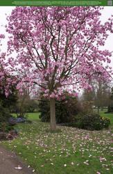 Magnolia Rain 2 UNRESTRICTED