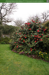 Into the Rose Garden 3 UNRESTRICTED