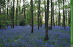Glades of Blue 4 UNRESTRICTED