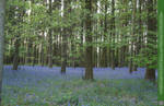 Glades of Blue 5 UNRESTRICTED