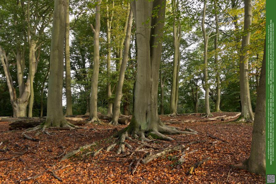 Woodlands  12 UNRESTRICTED by Elandria