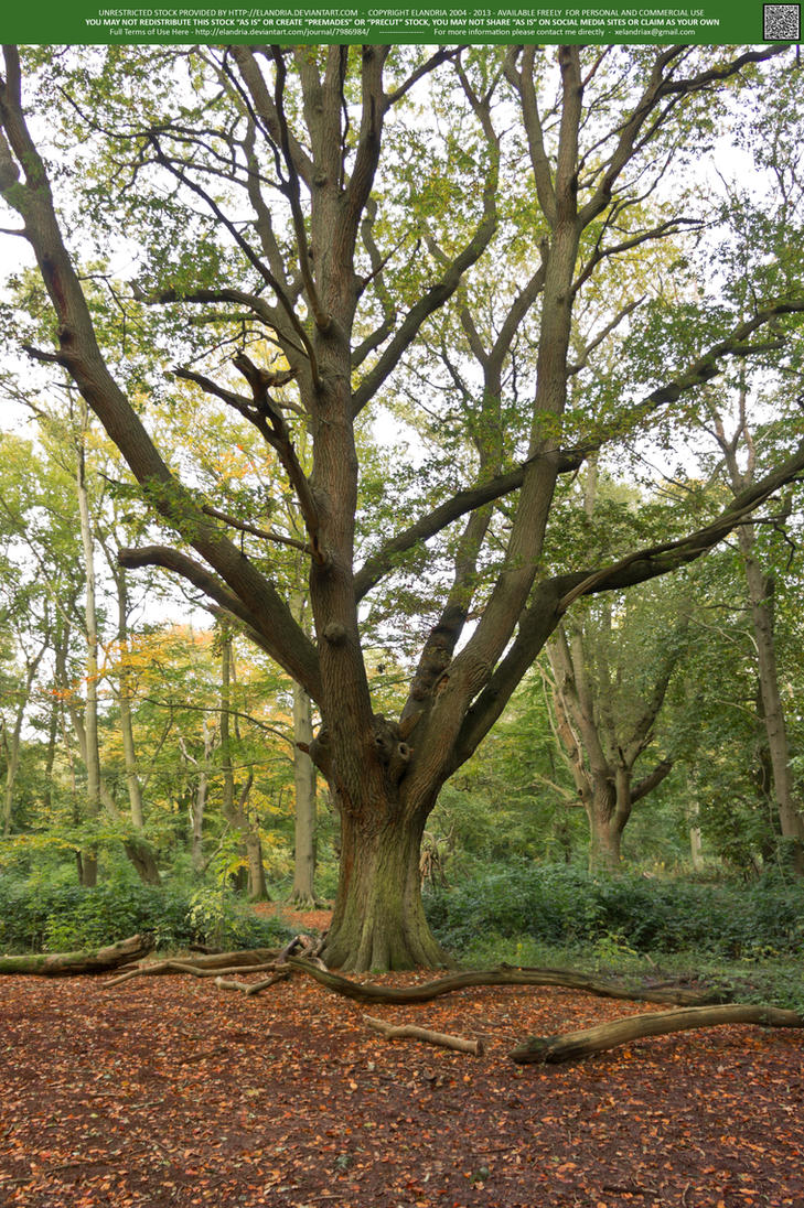 Woodlands  10 UNRESTRICTED by Elandria