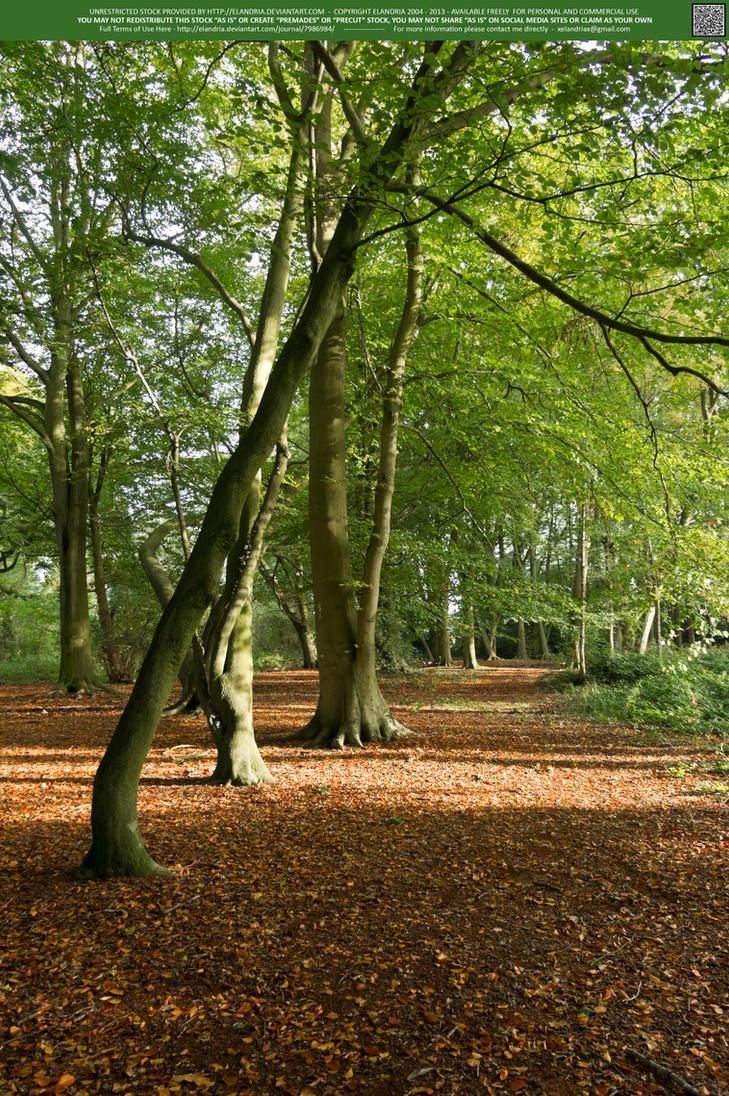 Woodlands  06 UNRESTRICTED by Elandria