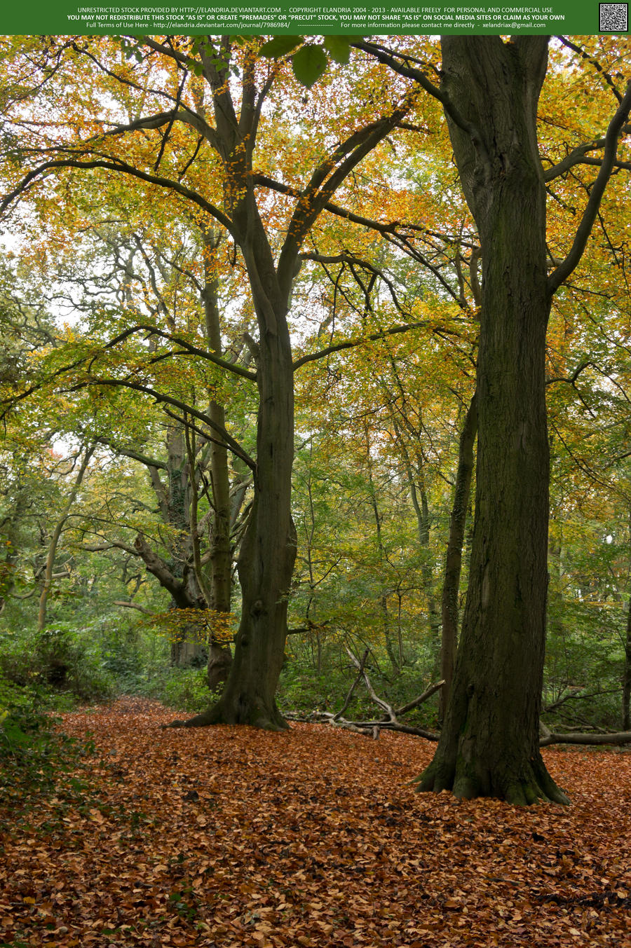 Woodlands  04 UNRESTRICTED by Elandria