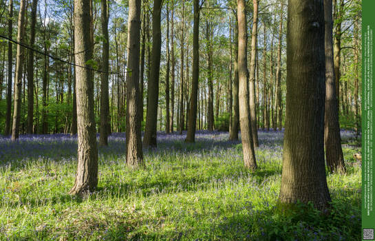 Glades of Blue 09 UNRESTRICTED