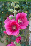 Childhood In Bloom 03 UNRESTRICTED