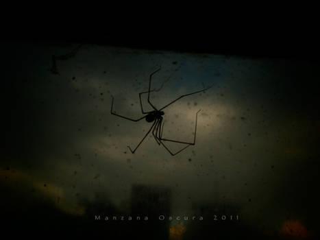 Spider by manzanaoscura