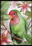+ Lovebird +