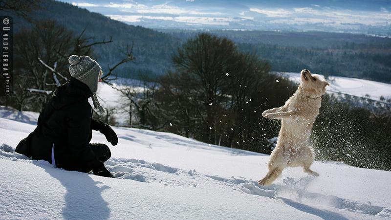 Snowdog by Unkopierbar