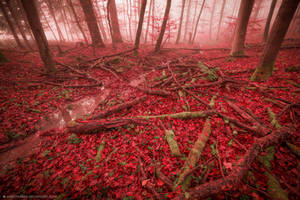 It's not safe in the Blood Forest, they said. by Unkopierbar