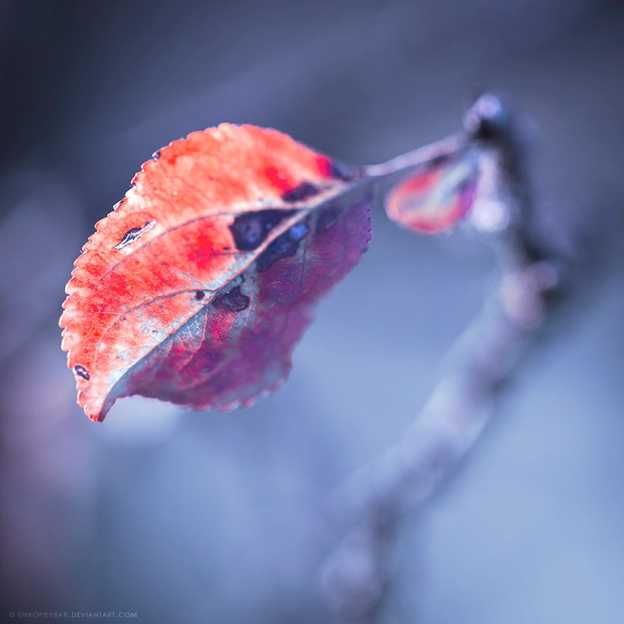 Cold Sun by Unkopierbar
