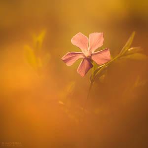 Hidden Beauty by Unkopierbar